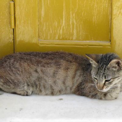 Tinian cat ...