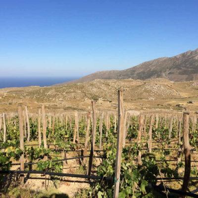 The vineyards in Falatados, Tinos